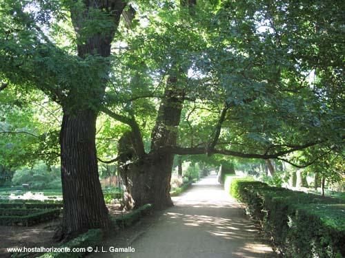 Real jardin botanico de madrid hostal madrid hostel for Jardin botanico madrid